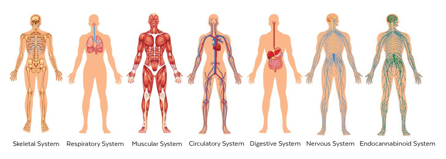 Image of human biological systems